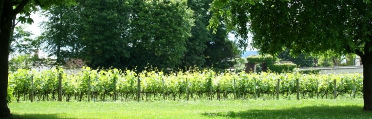 Champagne wijngaard