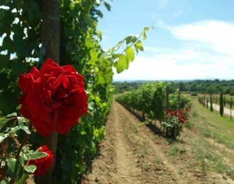 Domaine Gayda T'Air D'Oc Sauvignon Blanc