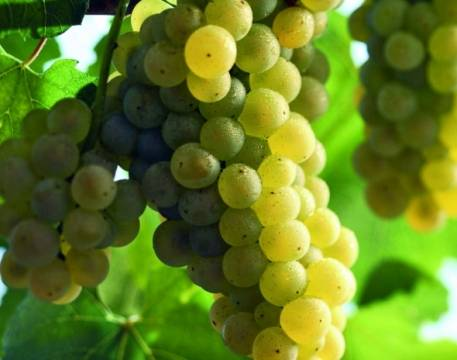 Palena Chardonnay