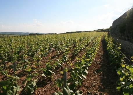 Domaine Michelot Bourgogne AC Blanc